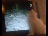 кот любит передачу,про животных)))